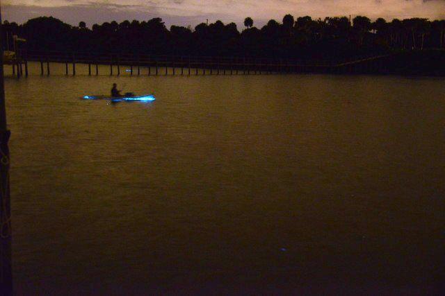 Photo from Edith Widder - Bioluminescent Kayaking Florida