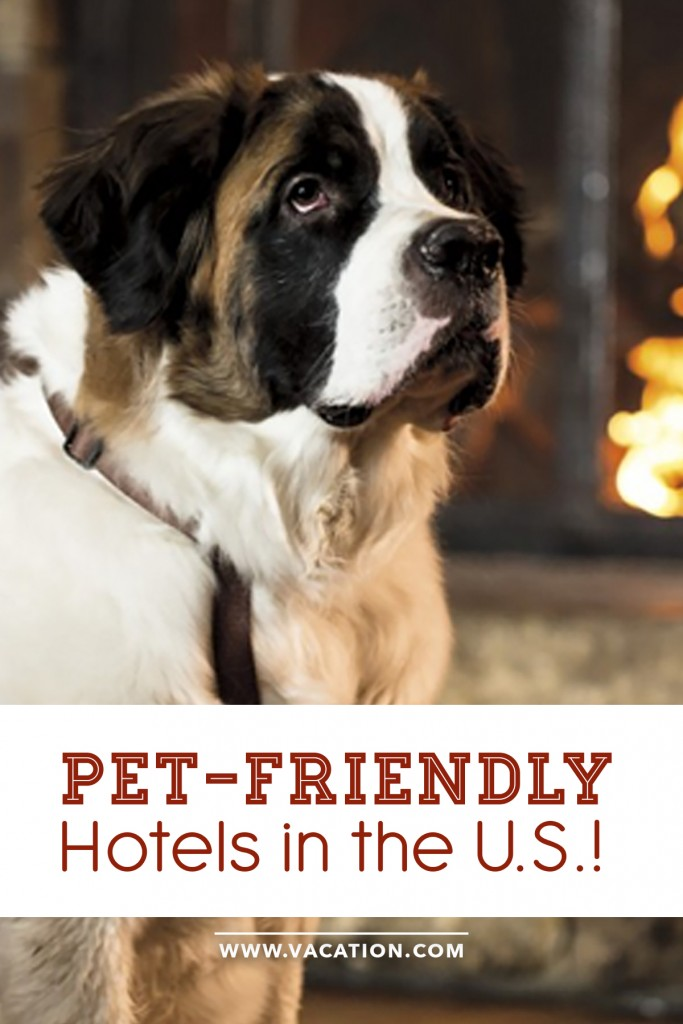 Pet friendly hotels in the US - never leave your running buddy home again