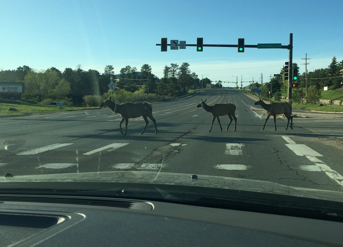 Why did the Elk cross the road
