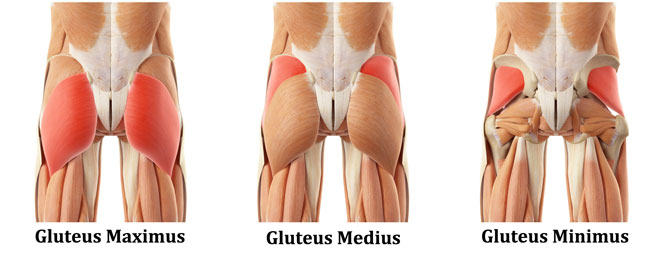 Understanding issues with inactive glutes