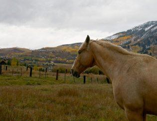 Colorado Autumn: Golden Moments + Home Camping!