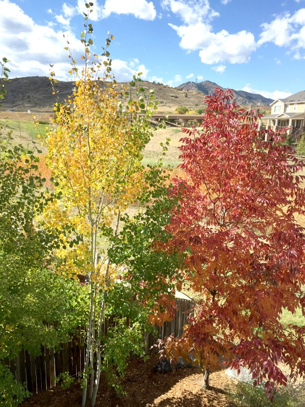 Colorado leaves