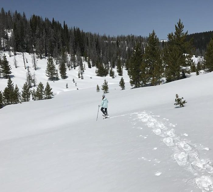 Snowshoe on Rabbit Ears Pass