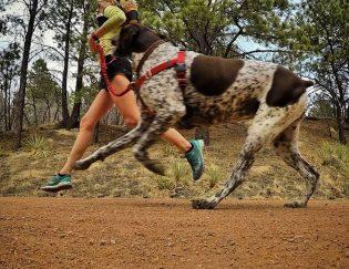 running dog leashes