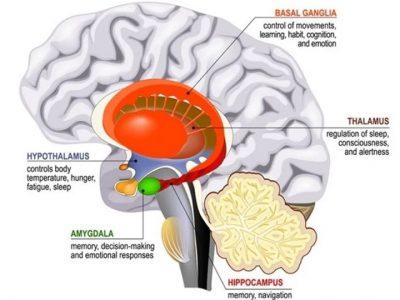 Running Brain Health