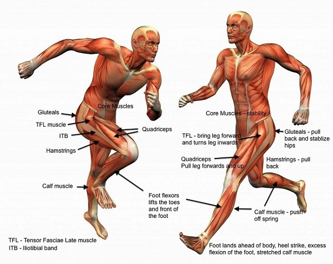 muscles used while running